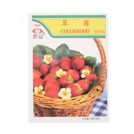 农益 草莓种子 9246